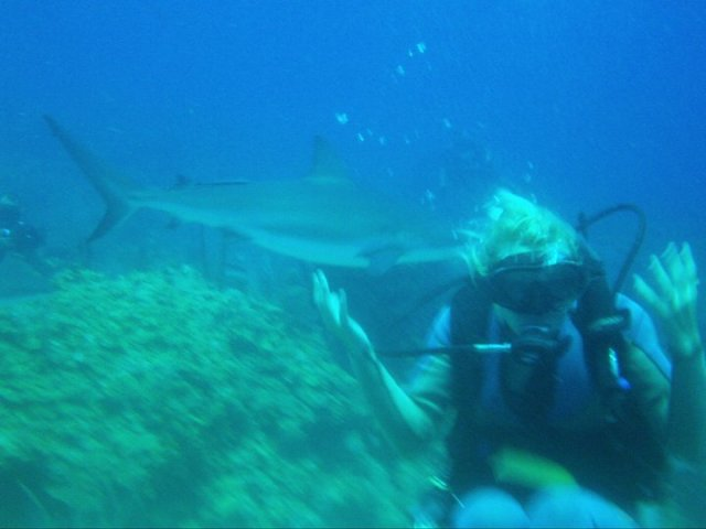 """merbabe diving with """"killing machines""""."""
