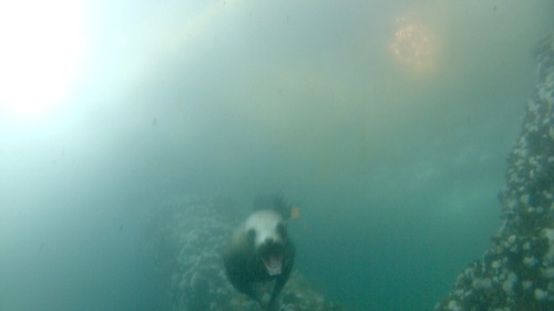 swimming with my front fins, NO BIG DEAL