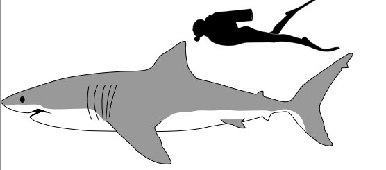 How do we two coexist? How have puny humans become such a menace to the Great White Shark?