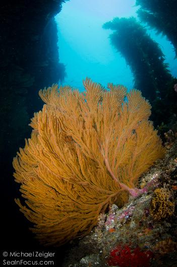 Compliments of Michael Zeigler, Sea in Focus