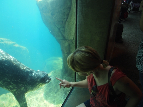 Final Test! Merbabe hangs out with a seal/sea lion(?) You'll find these guys like to play through the glass. Photo from Benji Goodlad, at the Aquarium of the Pacific