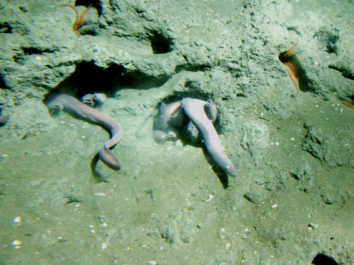 Hagfish. Not known for being the cutest of fish.