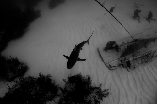 The plight of sharks is a black and white problem, they don't need shark week coming in and confusing everyone.