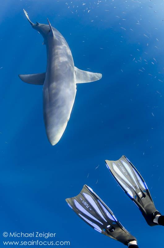 mz_lindsay_sharks-4