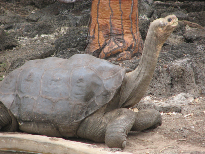 Lonesome, lonesome George.
