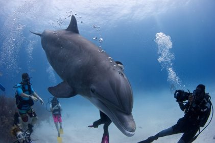 Dolphins, talking. Talking dolphins. Photo Credit to Dudley McLaughlin