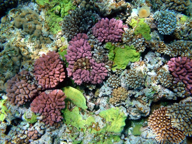 multy_color_corals